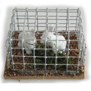 Gabbia con due conigli